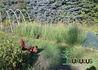 https://sites.google.com/a/lukulus.com/home/lesna-skolka/13.png